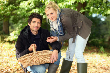 conkers: Couple gathering chestnuts Stock Photo