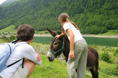 jack ass: Little girl petting donkey Stock Photo