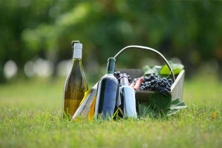 Basket and wine bottles in a field
