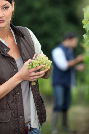 Gardener with bunch of grapes photo