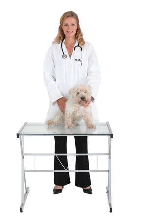 animal health: Animal health