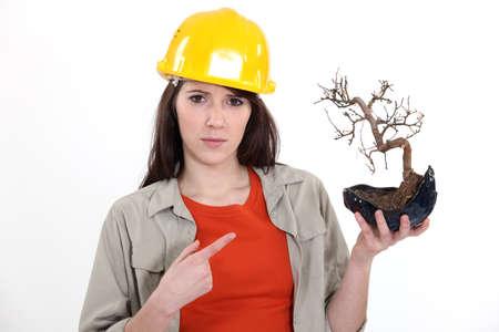 Tradeswoman holding a bonsai tree Stock Photo - 16191170