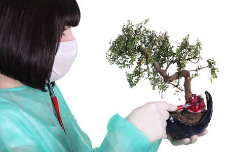 Doctor using stethoscope on plant photo