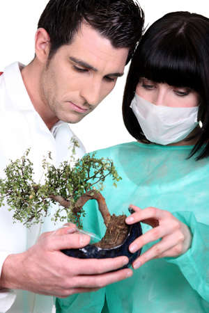 Doctors with a bonsai tree photo