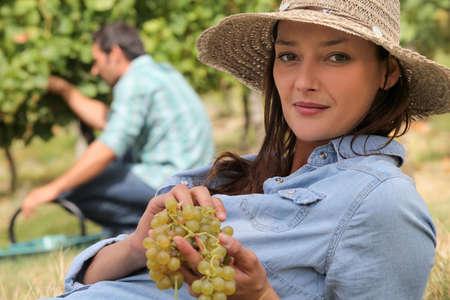 slowly: una mujer que llevaba un sombrero de paja está comiendo las uvas tras la cosecha de uvas de un hombre Foto de archivo