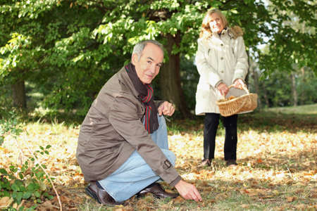 Senior couple gathering mushrooms Stock Photo - 22127797