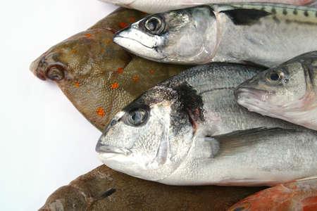 Various fish photo