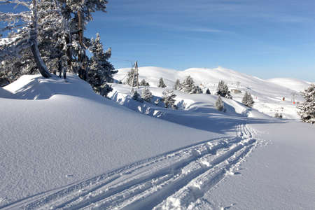 snowmobile: Tracks in the snow