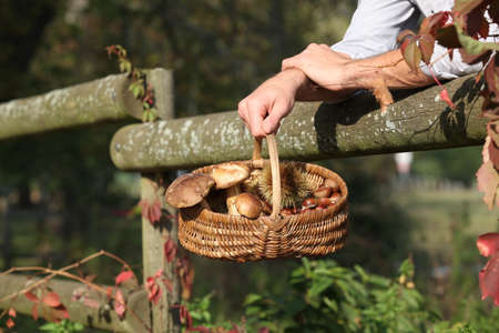 leaning by barrier: Gathering chestnuts and mushrooms in the forest