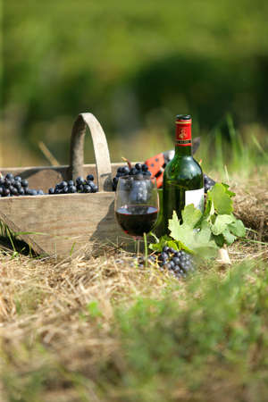 grapes in a basket photo