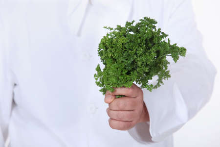 impart: Chef holding a bunch of parsley Stock Photo