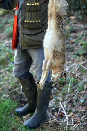 pursue: Dead hare