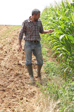 agronomist: Farmer in a cornfield