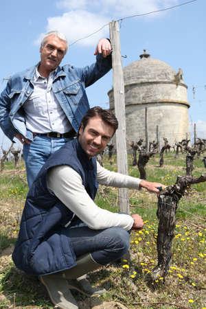 Men tending a vineyard Stock Photo - 24082203