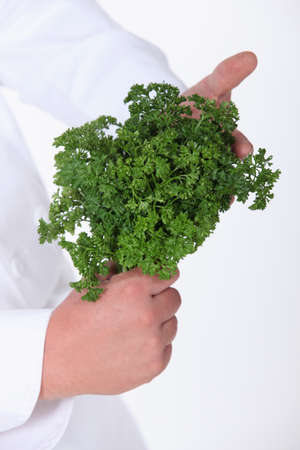 curly leafed: Chef holding a bunch of fresh parsley Stock Photo