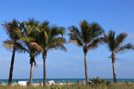 soltería: Las palmeras en una playa