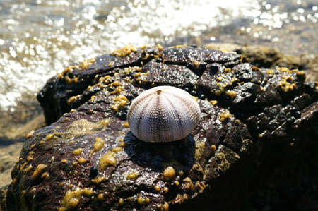 Seashell resting on a rock photo