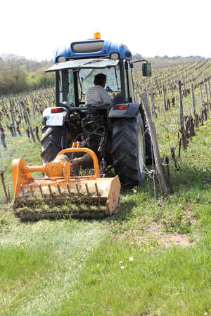 Tractor in vineyard photo
