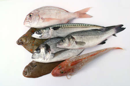 Assortment of fish photo