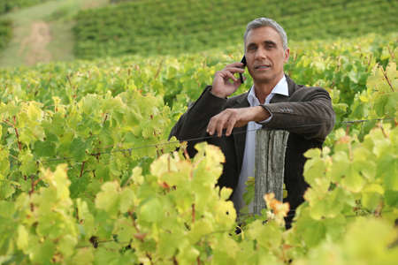 Senior man in vineyard photo