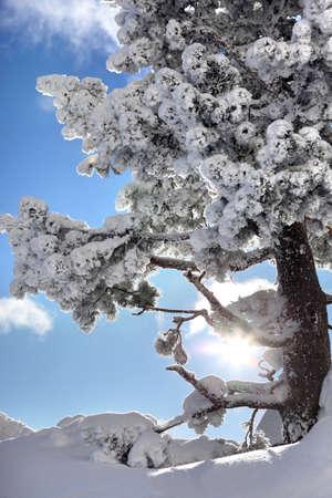 winterly: Winterly trees Stock Photo