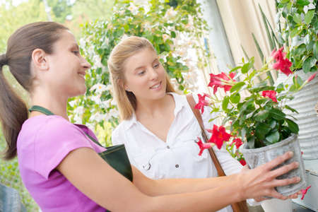 advice: Florist advising a customer