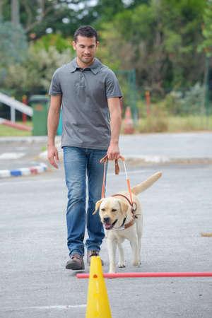 obedecer: perro de servicio