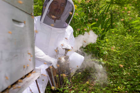 bee: using a bee smoker Stock Photo