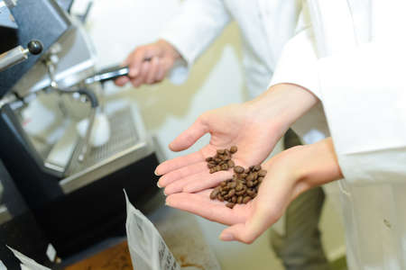 food testing: Coffee beans held in palm of womans hand