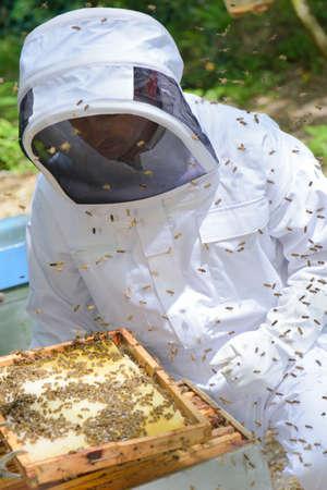 disturbed: disturbed bees