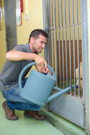 vetinary: Man putting water into dog kennel with watering can
