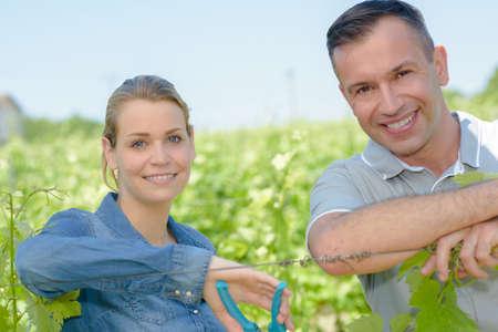 vineyard workers Stock Photo