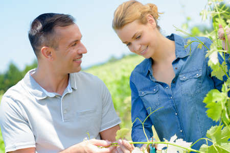 viniculture: Man and lady looking at grape vines Stock Photo