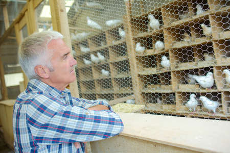breed: Adult man with his collection of pigeons Stock Photo
