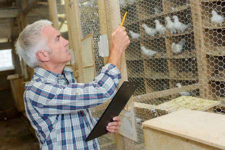 vogelspuren: Z�hlen Taube Lizenzfreie Bilder