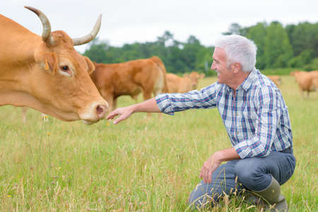 herdsman: Herdsman with cow Stock Photo