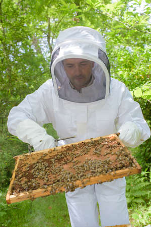 apiarist: beekeeper holding a frame Stock Photo