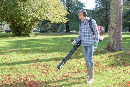 collecting: collecting the leaves
