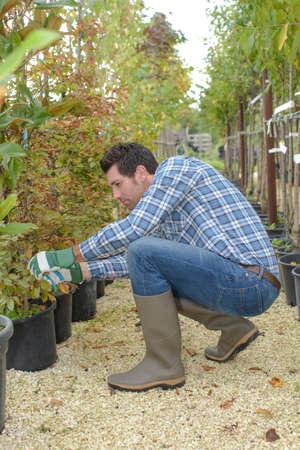 tending: Man tending trees in nursery