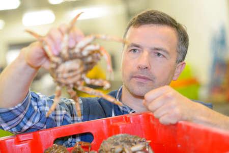 sorting: sorting the crabs