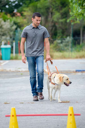 Man walking labrador