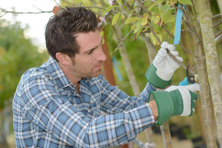 horticulturist: Horticulturist pruning tree branch Stock Photo