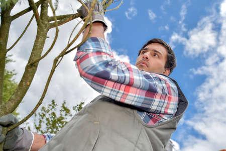 horticulture: Upward view of gardener next to tree