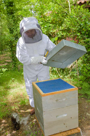 beekeeper opening hive Stock Photo