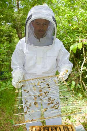 dismantle: Beekeeper dismantling beehive