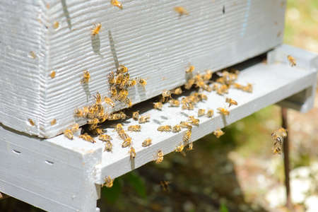 beehive with colony of bees