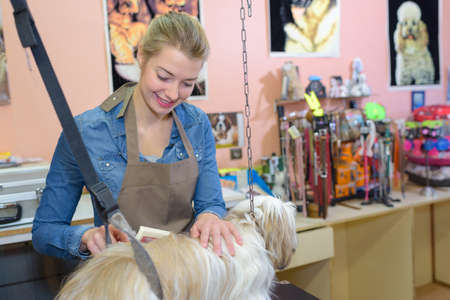 grooming: pet grooming business