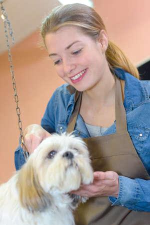 groomer: Female groomer with dog Stock Photo