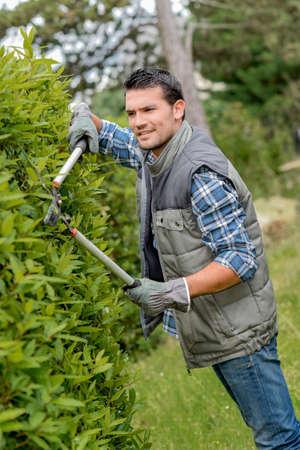 bush trimming: Man trimming bush with shears Stock Photo