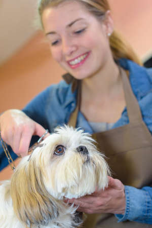 groomer: groomer taking care of a dog